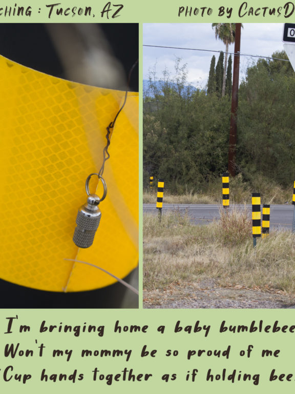 Geocaching in Tucson : BumbleBees!
